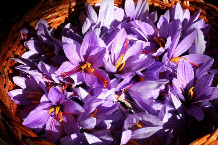 Sale price of saffron in Europe