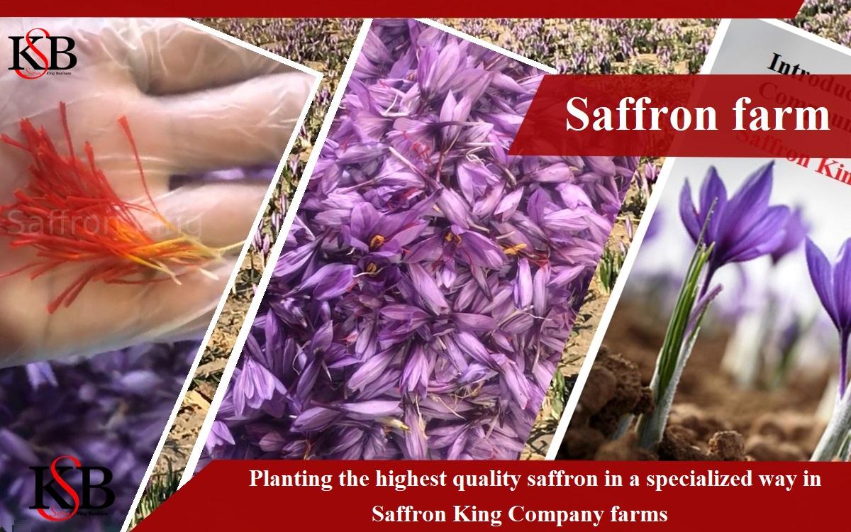 De consumptie van saffraan